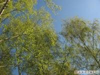 drzewokrzew_444