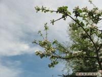 drzewokrzew_463