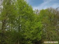 drzewokrzew_466