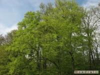 drzewokrzew_467
