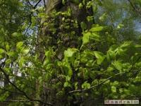 drzewokrzew_468