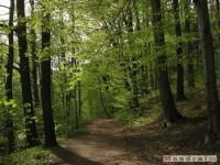 drzewokrzew_469
