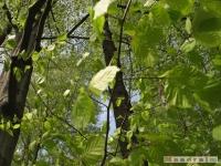 drzewokrzew_470