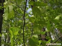 drzewokrzew_471
