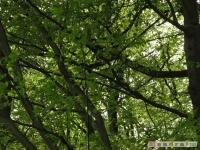 drzewokrzew_473