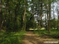 drzewokrzew_475