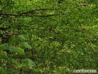 drzewokrzew_476