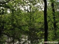 drzewokrzew_479