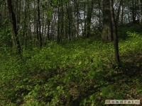 drzewokrzew_481