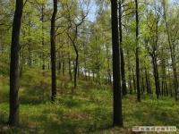 drzewokrzew_482