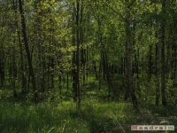 drzewokrzew_486