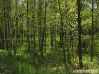 drzewokrzew_487