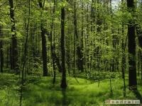 drzewokrzew_488