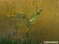 drzewokrzew_494