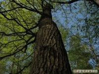 drzewokrzew_502