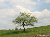 drzewokrzew_503