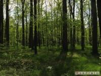 drzewokrzew_514