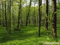 drzewokrzew_516