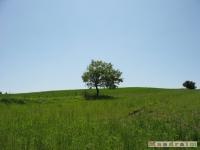 drzewokrzew_518