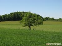 drzewokrzew_519