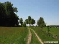 drzewokrzew_521