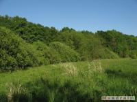 drzewokrzew_524