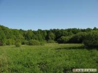 drzewokrzew_526
