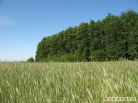 drzewokrzew_527