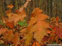 drzewokrzew_532