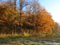 drzewokrzew_533