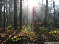 drzewokrzew_534