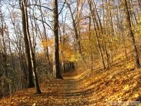 drzewokrzew_535