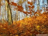 drzewokrzew_536