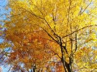 drzewokrzew_537