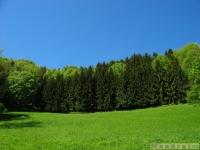 drzewokrzew_547