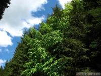 drzewokrzew_548