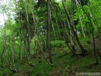 drzewokrzew_549