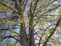 drzewokrzew_550