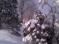 drzewokrzew_555