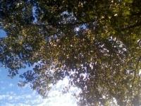 drzewokrzew_556