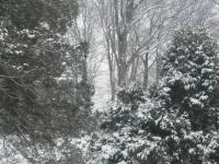 drzewokrzew_564