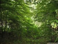 drzewokrzew_573