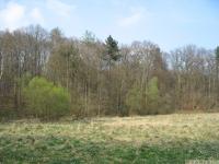 drzewokrzew_582