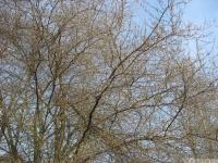 drzewokrzew_590