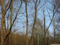 drzewokrzew_597