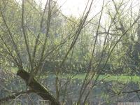 drzewokrzew_598