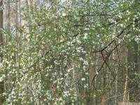 drzewokrzew_599
