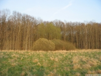 drzewokrzew_605