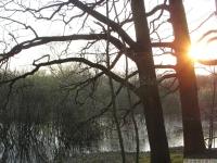 drzewokrzew_607