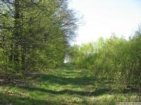 drzewokrzew_622